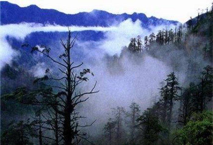 وادي الخيزران الأسود