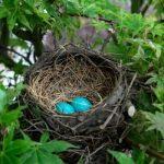 Photo of أبرز أنواع الطيور المنقرضة