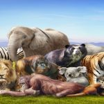Photo of متلازمات غريبة لا تصيب إلا الحيوانات