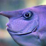 Photo of كيف تنام الأسماك