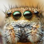Photo of لماذا تمتلك العناكب عيون كثيرة