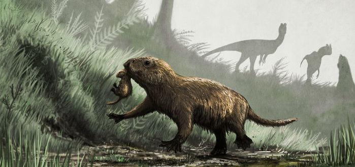 تعريف الانقراض التدريجي | المرسال