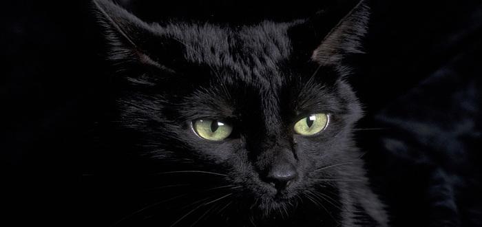 الفرق القط وعين الإنسان