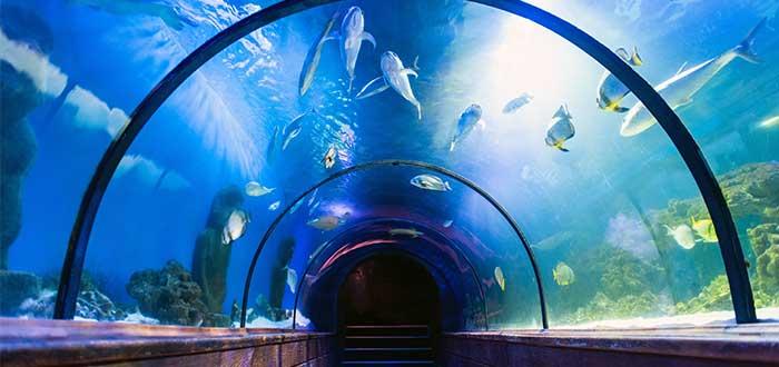 حوض أسماك جورجيا