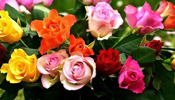 معاني الوان الورد المرسال