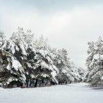 مناظر من الشتاء في الغابات
