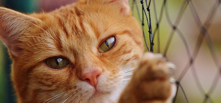 اسماء قطط يابانية المرسال