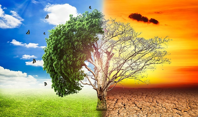 ما المقصود بالاختلال البيئي المرسال