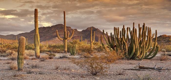 تعريف النظام البيئي الصحراوي ومكوناته المرسال