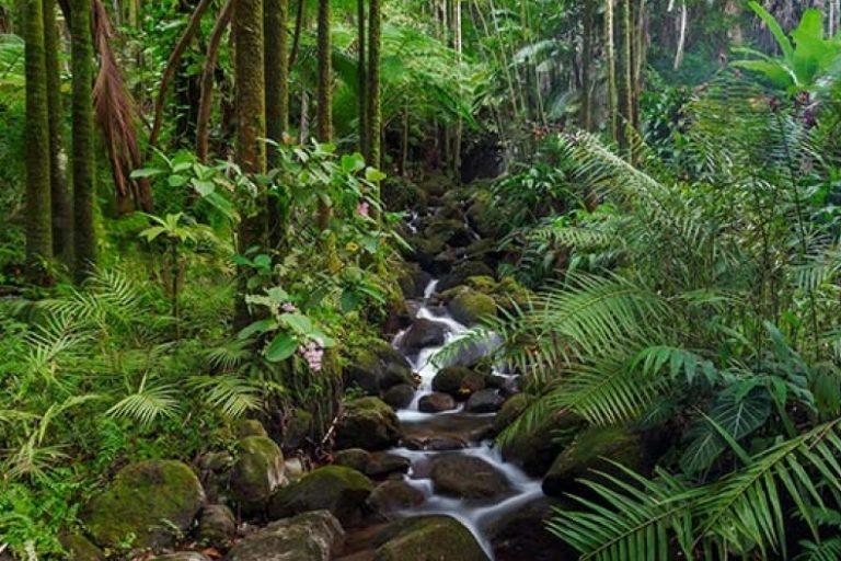 أنواع الغابات الاستوائية ومناطق انتشارها المرسال