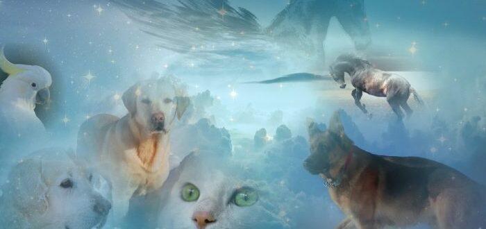 أرواح الحيوانات