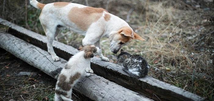 حكم قتل وتعذيب الحيوانات