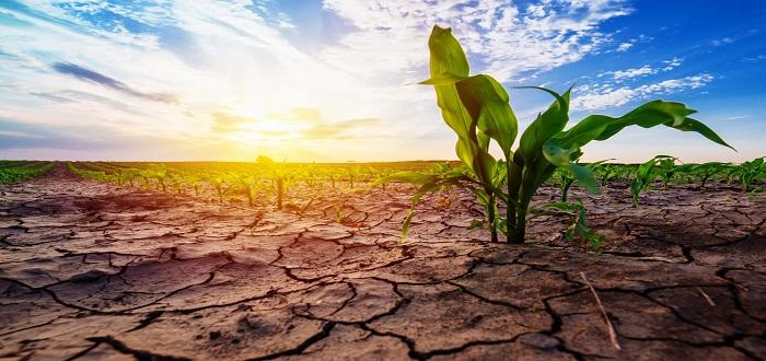 تأثير الجفاف البيئة