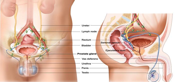 كيفية الوقاية من سرطان البروستاتا بعد الخمسين -الوقاية-من-سرطان-البروستاتا-بعد-الخمسين